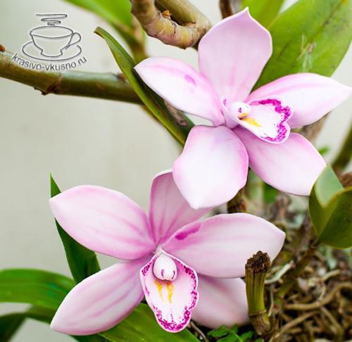 Орхидея из мастики.